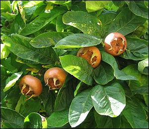 Quels sont ces fruits peu savoureux ?