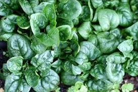 12 légumes à reconnaître