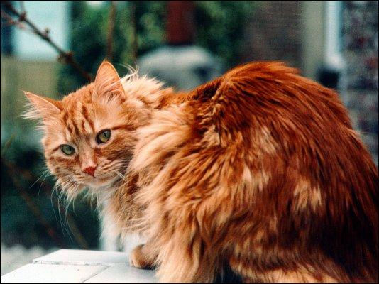 Comment s'appelle cette couleur de chat ?