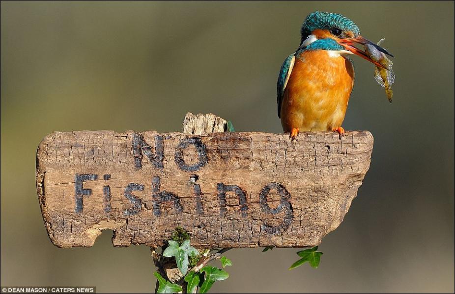 Quel oiseau est posé sur ce panneau ?