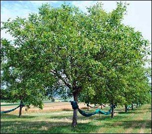 Reconnaissez-vous cet arbre ?
