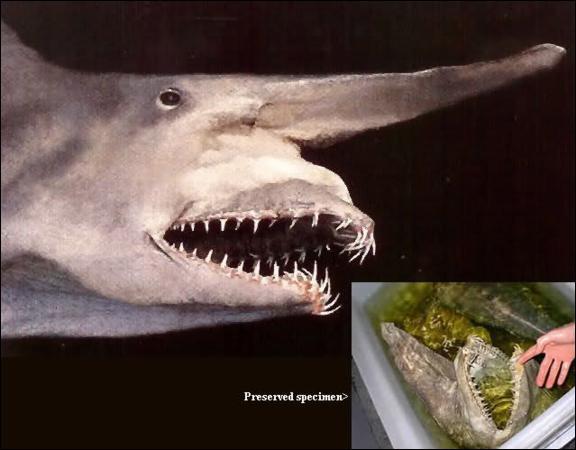 Quel est ce requin de couleur rosâtre ?