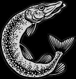 Quel est ce poisson au museau pointu ?