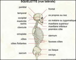 Complétez. C'est dans ... que l'on trouve cet os appelé  l'astragale ( le talus ).