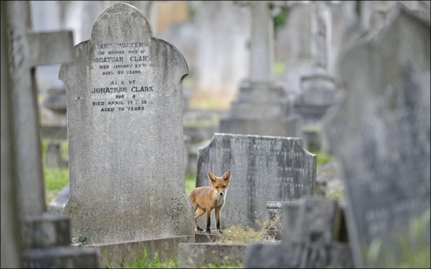 Nous sommes à l'Ouest de Londres, dans un cimetière, les voisins ne doivent pas être très bruyants puisqu'il y a ...