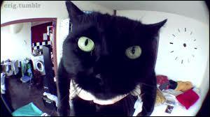 Comment s'appelle son gros chat noir ?