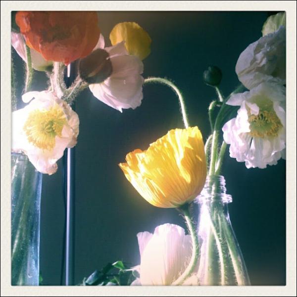 Délicatement placées dans de simples bouteilles, en guise de vases, c'est la grâce du mouvement de leurs tiges et leurs corolles légèrement plissées qui font le charme de ces fleurs. Ce sont ?