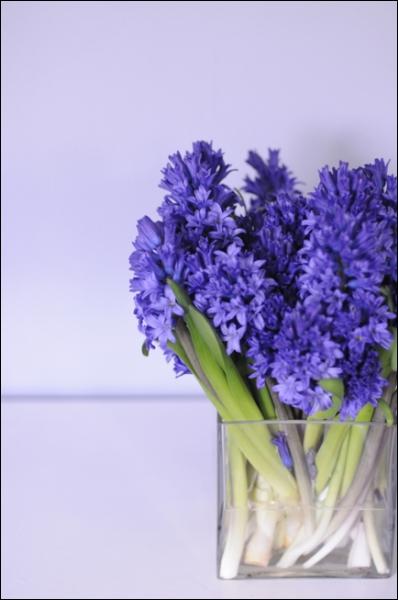 Placées serrées tout simplement dans un vase carré, quelles sont ces fleurs parfumées ?