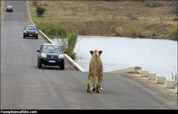 Vous roulez tranquillement en voiture, et soudain débouche ...