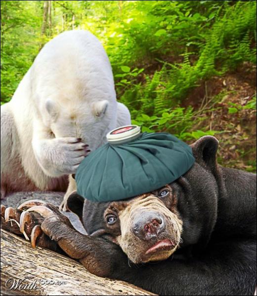 Un ours polaire et un grizzli peuvent se reproduire ensemble !