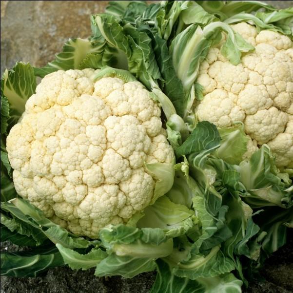 """Ce légume breton cultivé pour ses inflorescences et apprécié en gratin, contient dans son nom la description d'un malade peu attirant. L'affection est qualifiée de """"mal royal"""" !"""