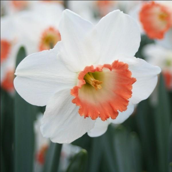 Avec le nom de cette belle fleur printanière au parfum entêtant vous pourrez conjuguer le verbe rincer à la première personne du subjonctif imparfait.