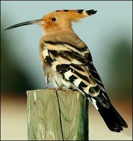 Quizz ab c daire des oiseaux n 7 quiz oiseaux - Les oiseaux de nos jardins et de nos campagnes ...