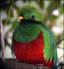 Quel est ce splendide oiseau ?
