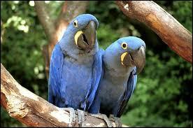 Quels sont ces magnifiques oiseaux ?