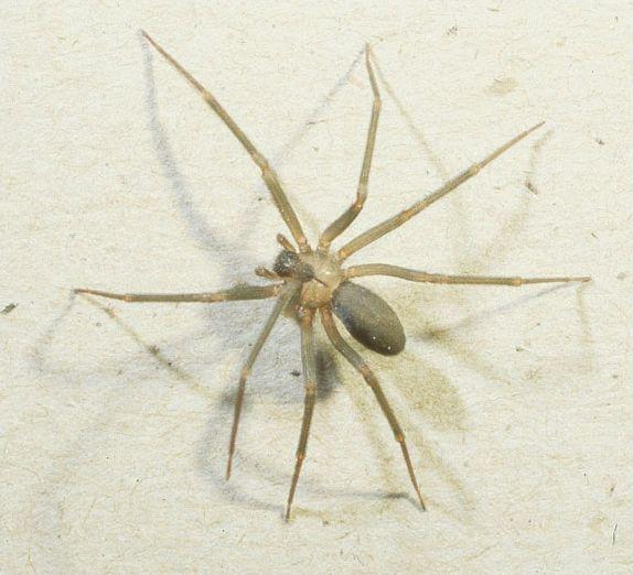 Tout sur l'araignée !