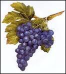 Comment appelle-t-on le raisin en espagnol ?