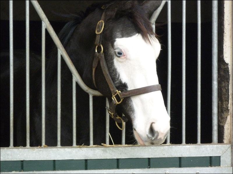 Vous passez à côté d'un poney et vous remarquez que sa bouche entièrement blanche . Mais vous n'arrivez plus à déterminer ce que c'est :