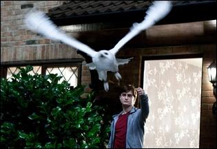 Hedwige est morte en voulant protéger Harry, mais qui lui a lancé le sort mortel ?
