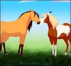 Comment s'appellent ces chevaux ?