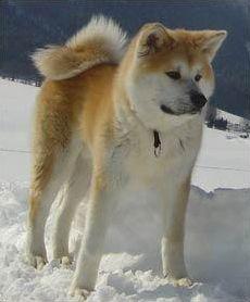 Quizz Canin