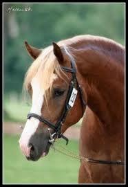 Quelle est la distance qu'un cheval parcourt au pas ?