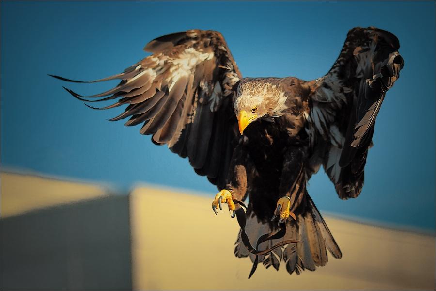 A qui associez-vous cet oiseau ?