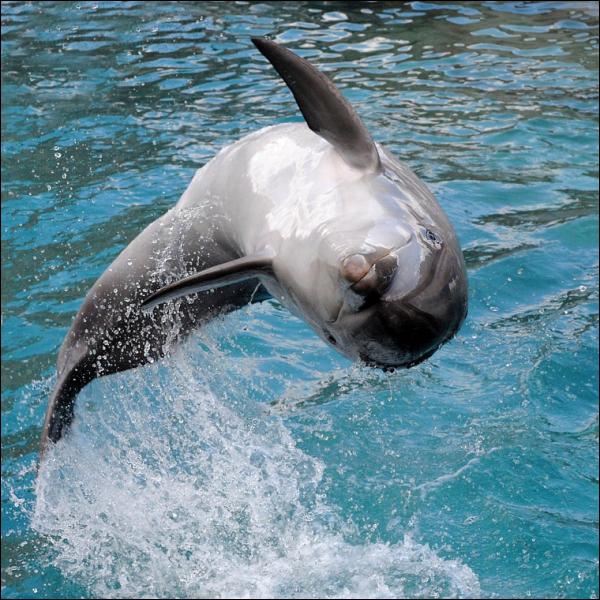 Gentil mais triste, ce dauphin !