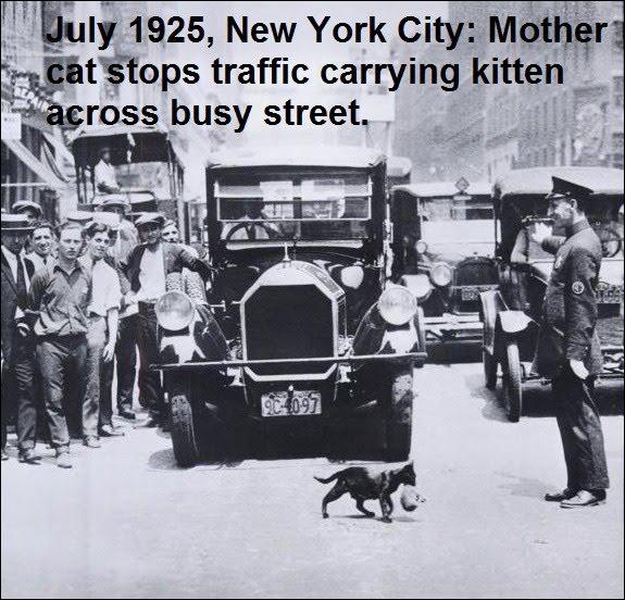 Une très jolie photo ancienne de Juillet 1925, montrant la circulation stoppée à New-York, par un policier, pour laisser passer (cliquez sur la photo)... ?