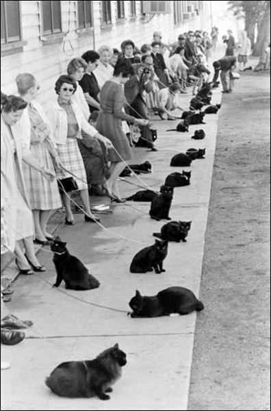 Cette photographie date de 1961 et a été prise aux USA. De quoi peut-il s'agir à votre avis ?