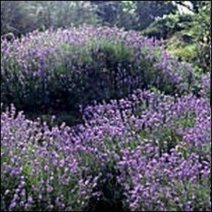 Un pied de cette plante au potager est également un attrait pour tous les pollinisateurs :