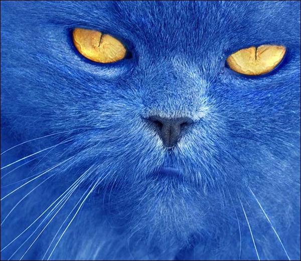 Quizz les couleurs avec les animaux quiz animaux couleurs - Couleur avec le bleu ...
