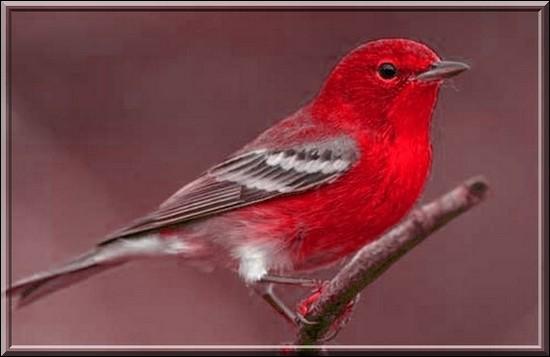 Quizz les couleurs avec les animaux quiz animaux couleurs for Oiseau vert et rouge