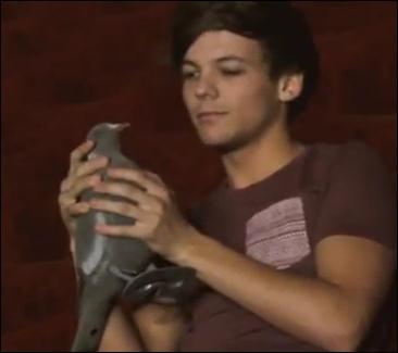 Comment s'appelle le pigeon que Louis a dans une vidéo  diary  ?