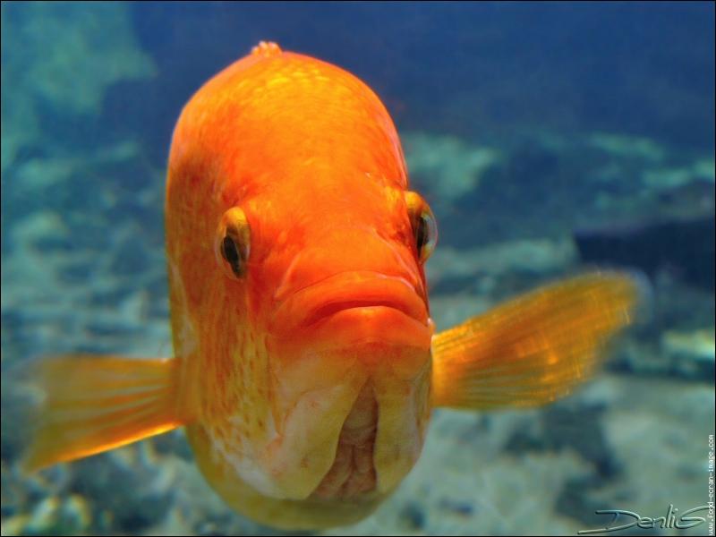 Quel est le plus gros des poissons ?
