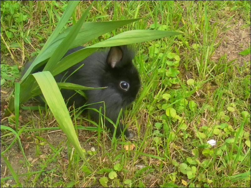 Cette lapine est une lapine... (Zoomer pour mieux voir ! )
