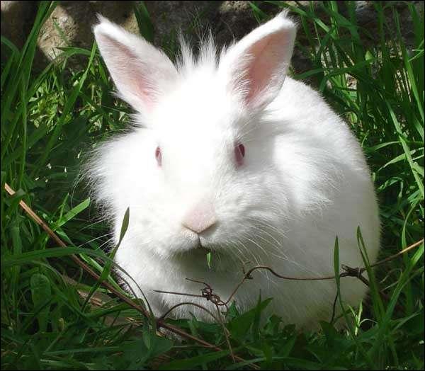 Le lapin ne doit surtout pas cohabiter avec des enfants de moins de 7 ans .
