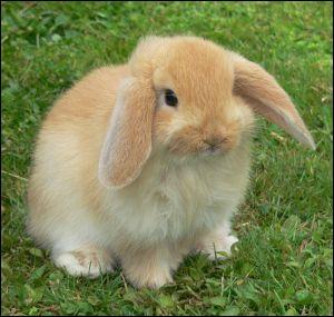 Carottes, bananes et autres fruits et légumes sucrés sont à donner au lapin...