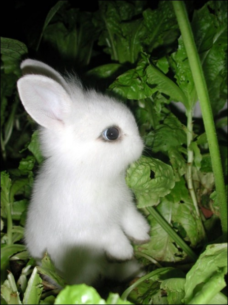 Le lapin est adulte à...