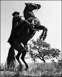 ''Et et... Zorro est arrivé / Sans s'presser / Le grand Zorro / Le beau Zorro / Avec ---------------------'' (Henri Salvador)