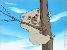 Comment s'appelle la soeur de Bouba, le petit ourson orphelin ?