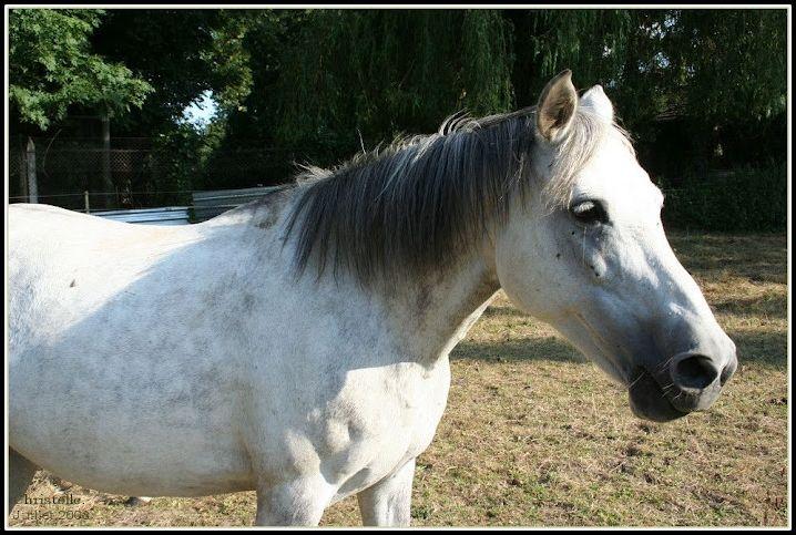 quizz galop 1 quiz chevaux equitation. Black Bedroom Furniture Sets. Home Design Ideas
