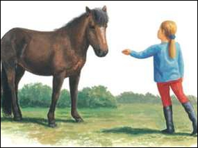Pour attraper un cheval ou un poney en pâture, que faut-il faire ?