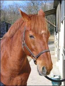 Quelles précautions faut-il prendre en attachant un cheval dans le club ?