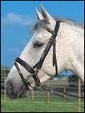 Comment débrider correctement un cheval ?