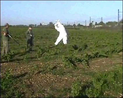 Que fait-il aux chasseurs dans la vidéo du lapin ?