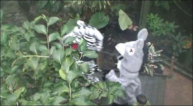 Quel animal n'apparaît pas dans la vidéo Tarzan ?