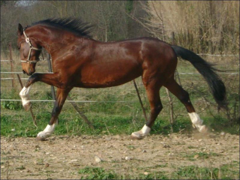 Quelle est la couleur de la robe de ce cheval ?