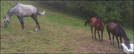 Quelle est la couleur de la robe du cheval éloigné ?