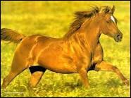 Comment dit-on cheval en anglais ?